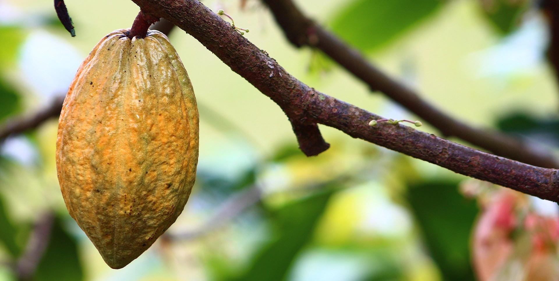 cocoa-1529742_1920.jpg